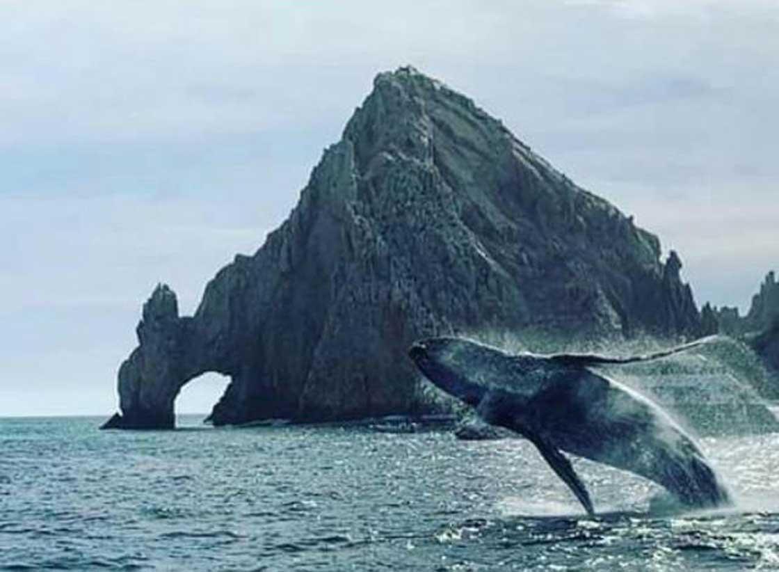whale-scroll